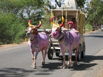 Ox cart on the highway to Udaipur