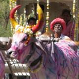 Holi ox cart in India